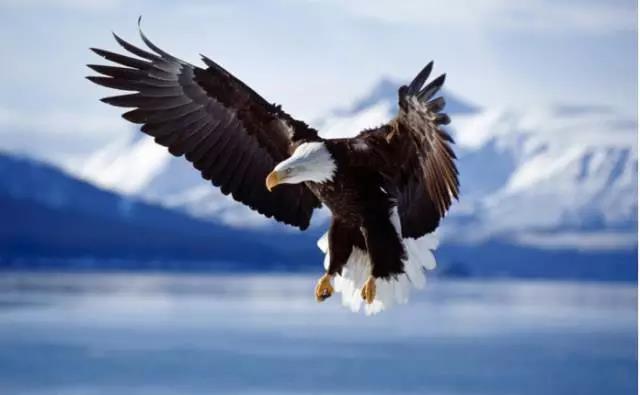 孩子羽翼丰满_很久以前,曾经有三只小鸟,它们一起出生,一起长大,等到羽翼丰满的时候